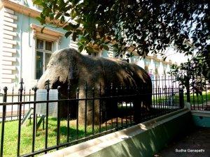 Elephanta Elephant, Mumbai, Bhau Daji Lad Museum