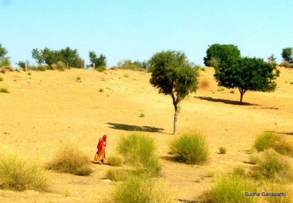 Rajasthan Trip, Bikaner, Arid Desert