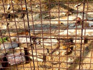 Akal Wood Fossil Park, Akal, Jaisalmer