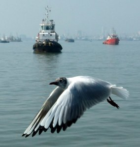 Seagull, Mumbai Port and Harbour Tour, KGAF,