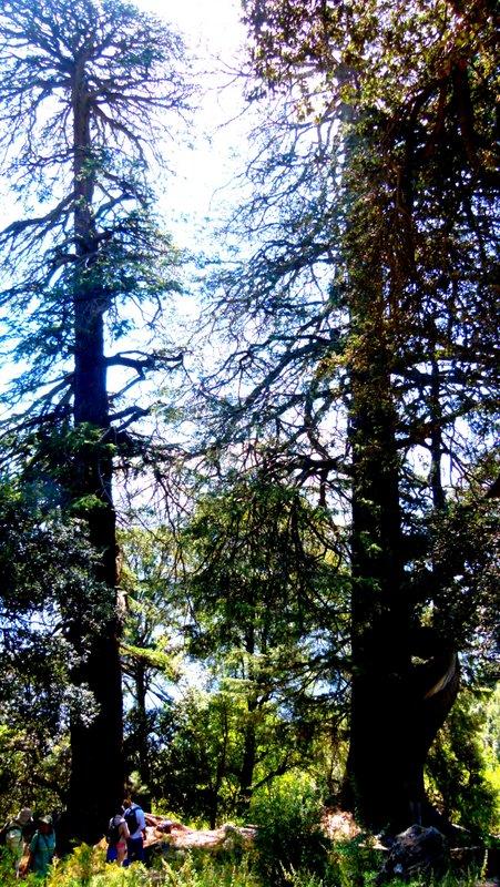 Sacred Sites, Travel, Himachal Pradesh, Devbhoomi, Kaalchakra Gompa, Rekong Peo, Sacred Grove