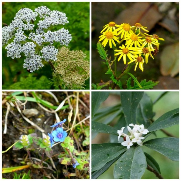 Flowers, Himalayan plant, Himachal Pradesh, plants, travel