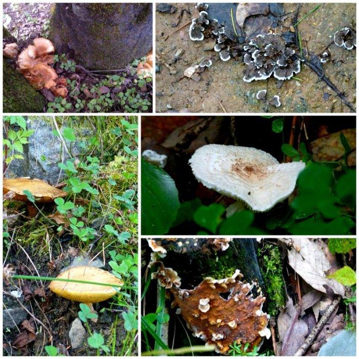 Fungi, Mushrooms, Himalayan Plants, Himachal Pradesh, Travel