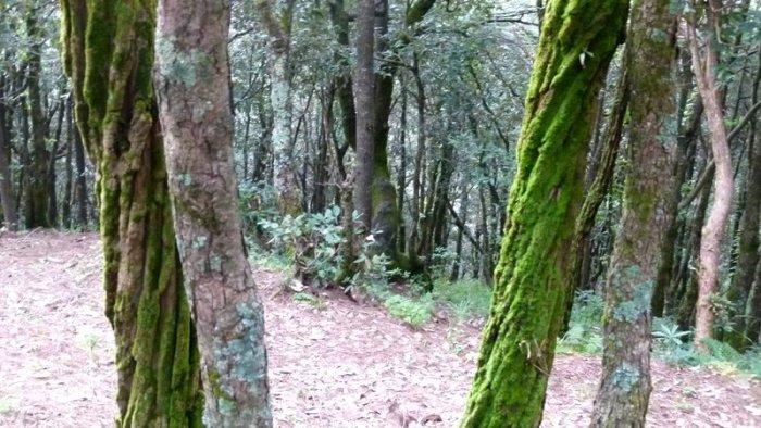 Moss on  a tree trunk, Himalayan plants, Himachal Pradesh, Plant Kingdom, Bryophyte