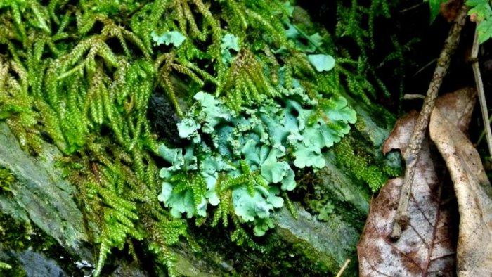 Himalayan plant, Himachal Pradesh, plants, travel