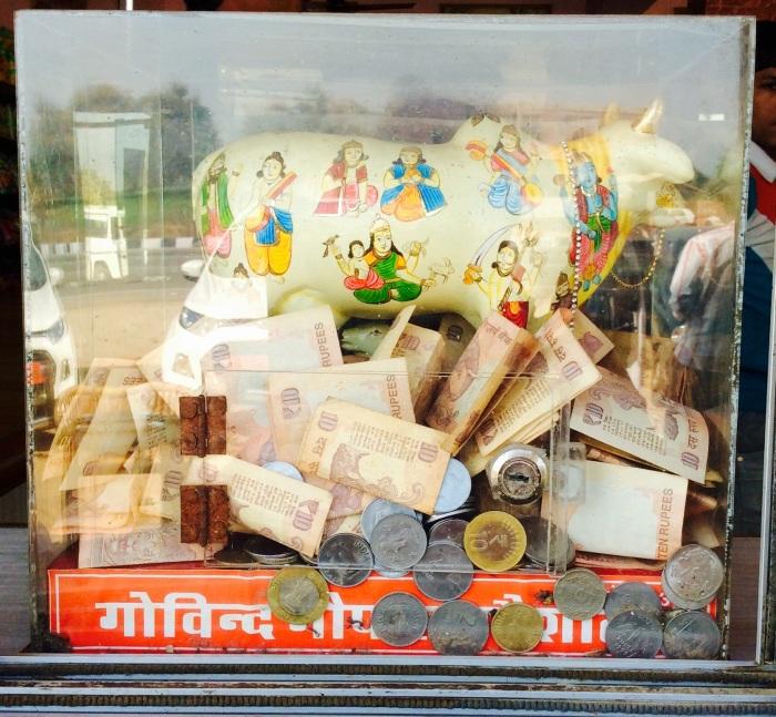 Cow in the box, donation box, Govind Gopal Goshala, Rajasthan