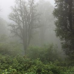 Landour, Travel, Rokeby Manor, Landour Loop, Walking Trail, Holiday In The Hills, Uttarakhand, Mussoorie