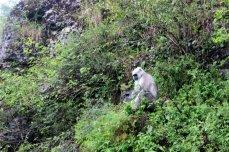 Landour, Mussoorie, Uttarakhand, Travel, Hill Station, Exploration