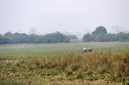 UNESCO World Heritage Site, Historical Monument, Architecture, Heritage, India, Incredible India, Kaziranga National Park, Assam, Wildlife Sanctuary